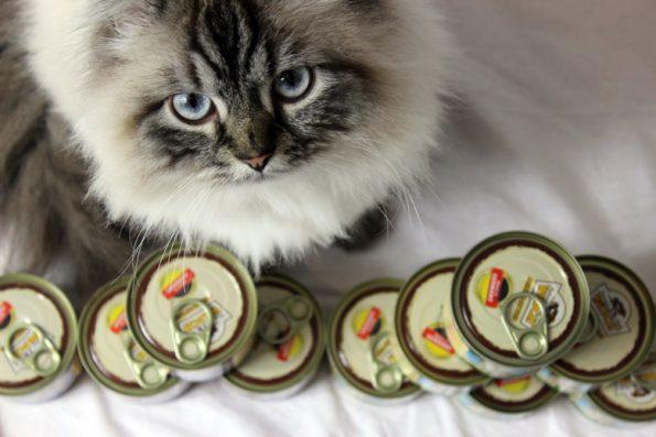 Nassfutter Wildcat
