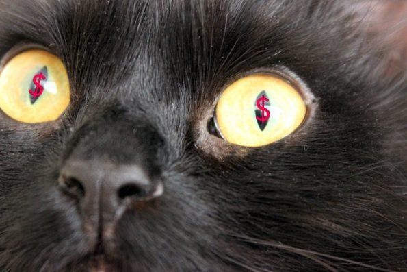 Sparen beim Kauf von Katzenprodukten