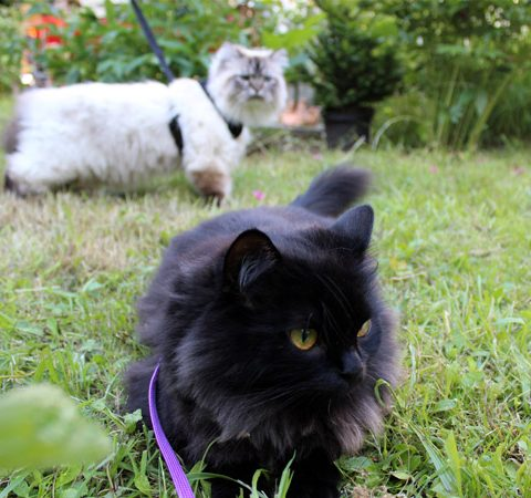 Mit Katze spazieren gehen - geht das?