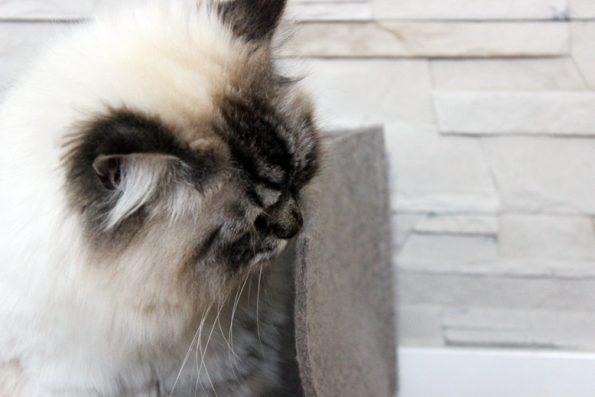 Katzenbett aus Filz von stylecats- Unter die Lupe nehmen durch Simba