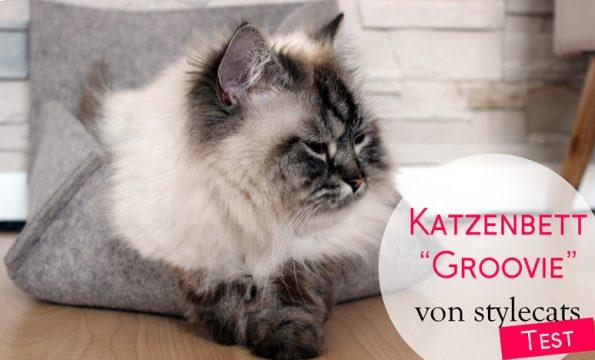 Stylecats Groovie-Katzenbett Produkttest