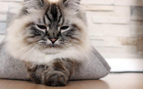 Stylecats- Groovie Katzenbett aus Filz schlafende Katze
