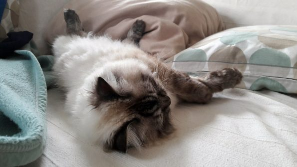 Katze-Schlafposition