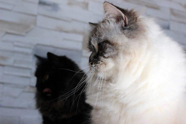 Katzen im Profil