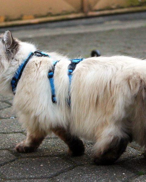 Katzengeschirr- welches ist empfehlenswert?
