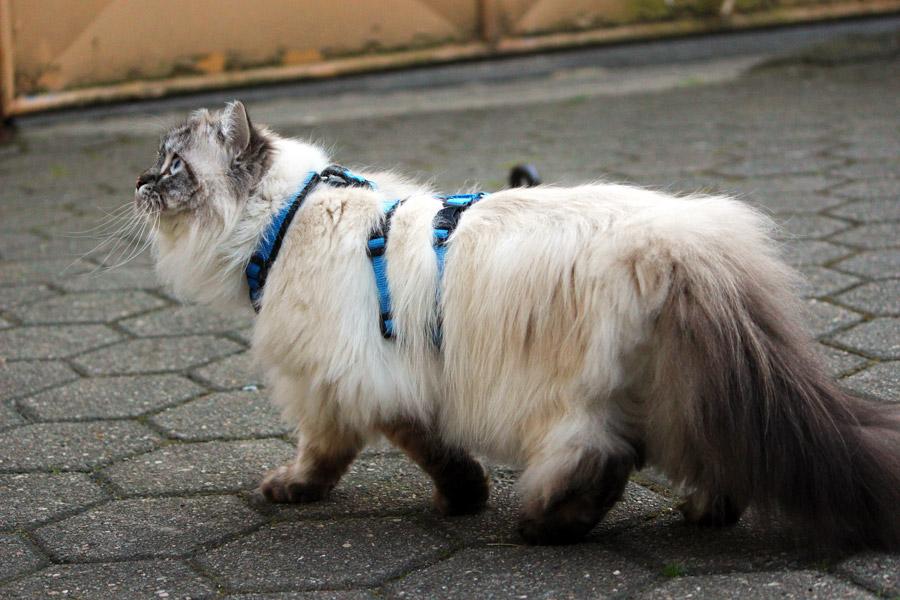 Katze an der Leine – FAQ