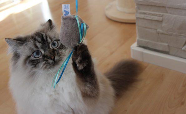 Katze spielt mit Julinka-Spielzeug