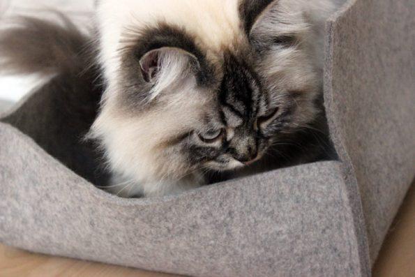 Katzenkörbchen Stylecats