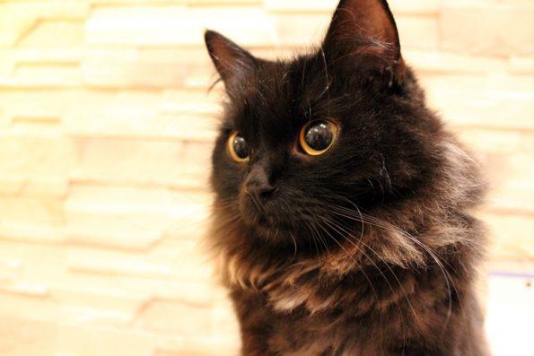 Weite Pupille der Katze