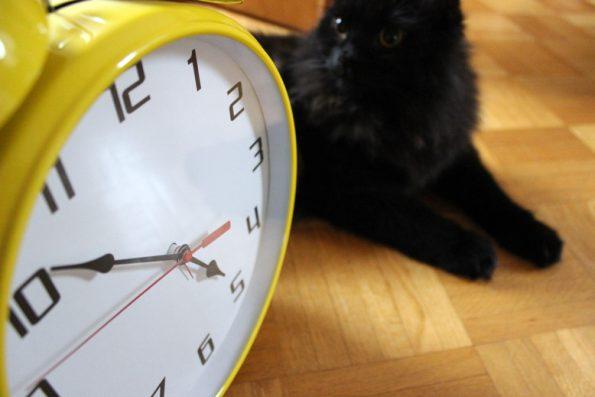 Katze Morgenroutine Wecker