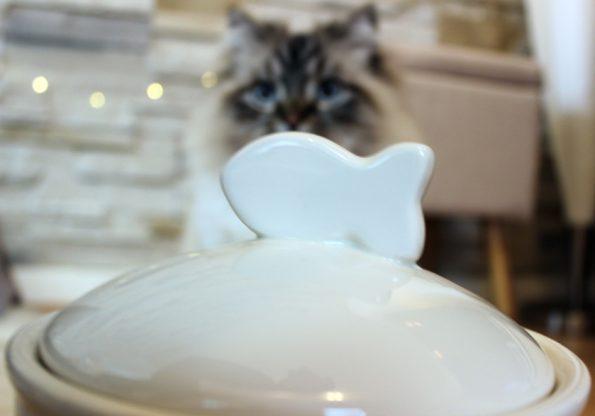 Vorratsdose Katzenfutter