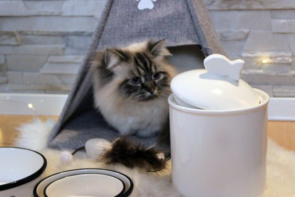 Futterdose und Katzentipi