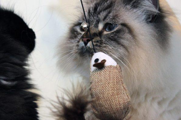 Spielzeugmaus für Katzen