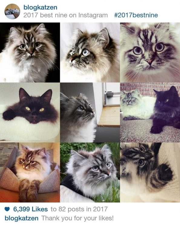 Blogkatzen Insta best nine 2017
