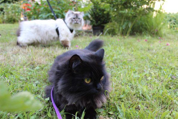 Blogkatzen gehen Gassi
