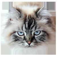 Blogkatzen