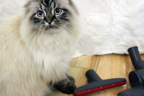 Katze mit Staubsaugerzubehör