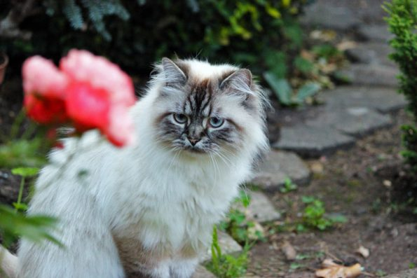 Katze im Garten mit Blume