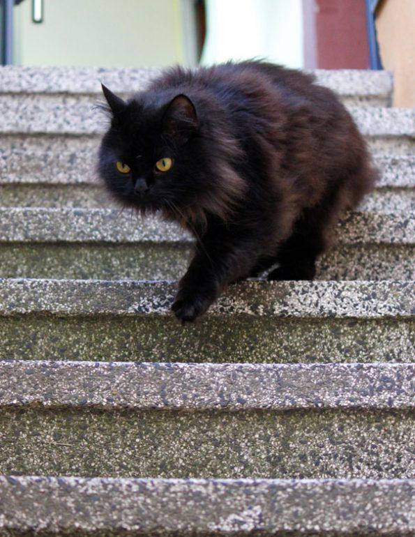 Schwarze Katze auf Treppe