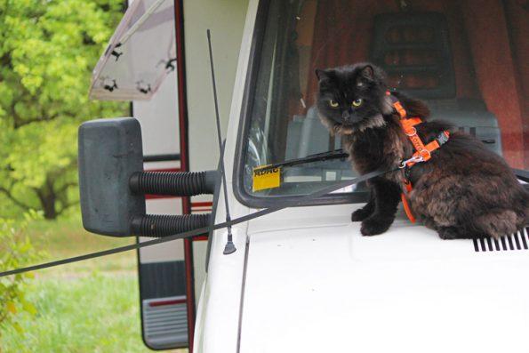 Katze auf dem Wohnmobil