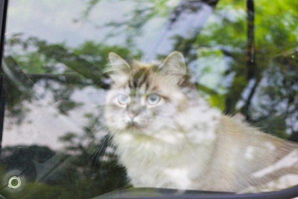Katze durch Wohmobilfenster