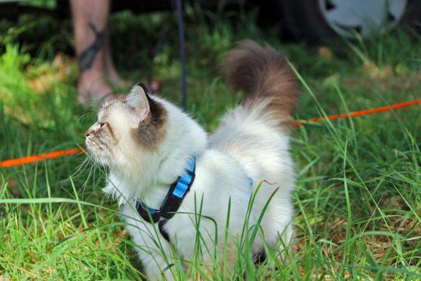 Katze beim Sonnenbad