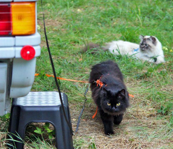 Katzen am Wohnmobil