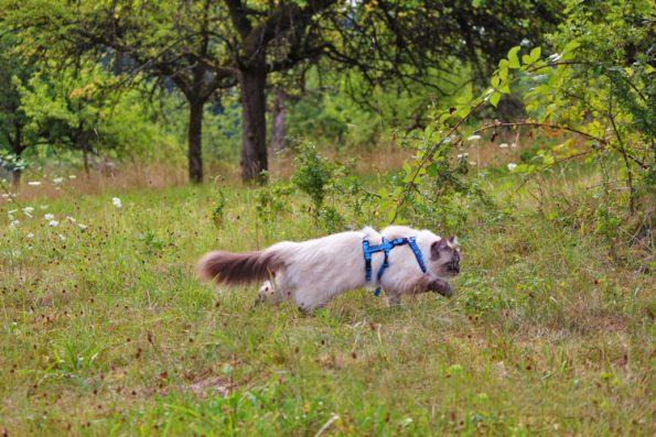 Katze beim Sprinten