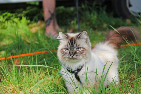 Katze im Fokus auf Wiese