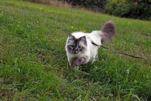 Wandern mit Katze