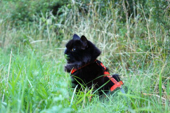 Wandern mit Katze- Katze im Grünen