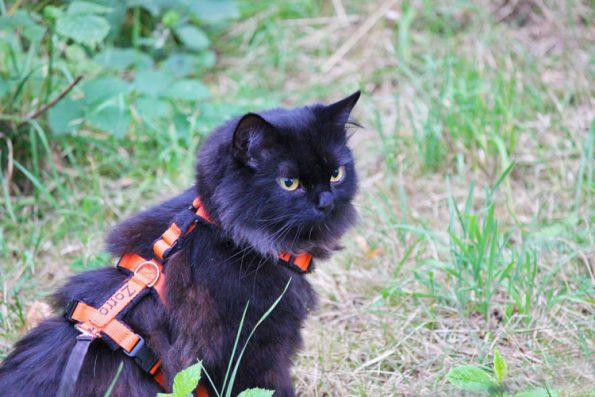 Katze mit Leine draußen