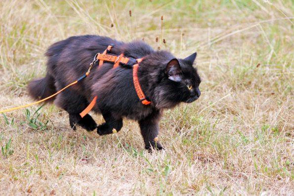 Katze im dürren Gras