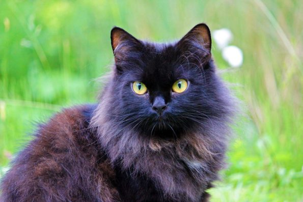 Blogkatzen Zorro Portrait im Garten