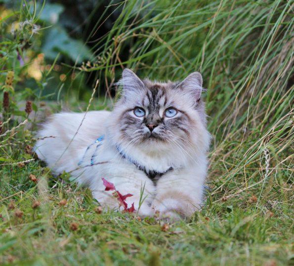 Blogkatzen Simba Katzenportrait im Garten