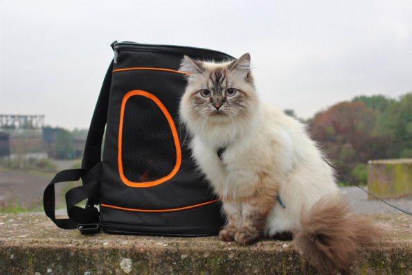 Katzenrucksack Petsfit Catbackpack