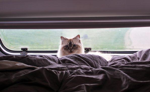 Katze im Wohnmobilbett