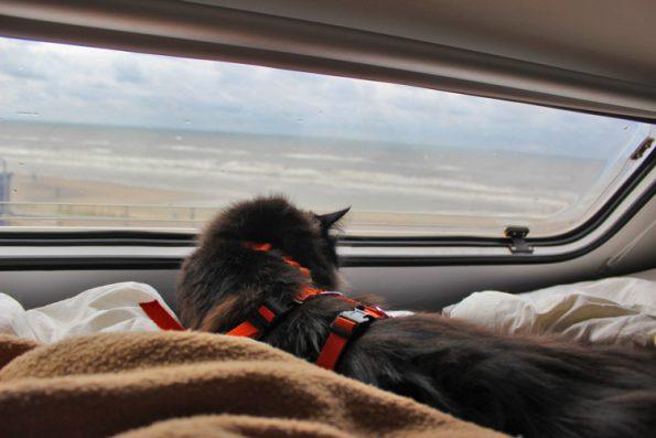 Katze im Alkoven in Zandvoort
