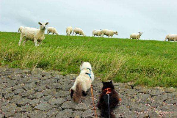 Katzen und Schafe