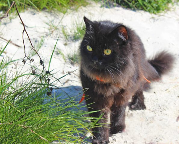 Schwarze Katze am Strand