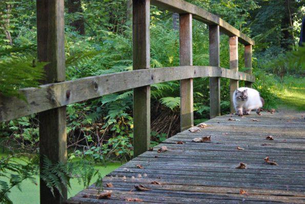 Katze auf Brücke in Holland