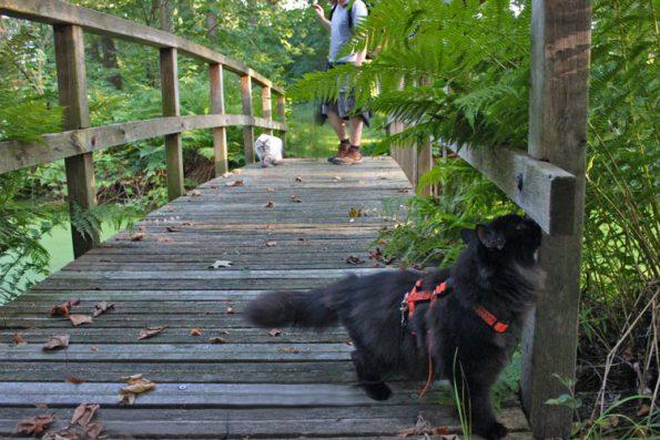Katzen laufen über Brücke