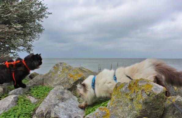 Katzen klettern auf Felsen am Meer