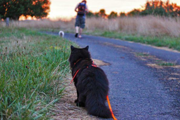 Reise mit Katze- Katze geht auf Weg Gassi
