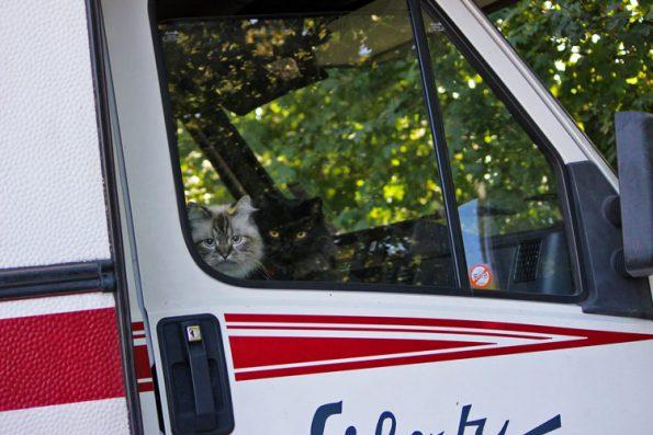 Reisen mit Katzen im Wohnmobil