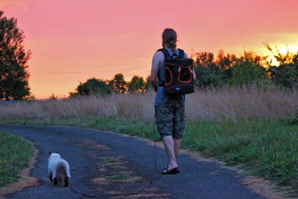 Reisen mit Katze gen Sonnenuntergang