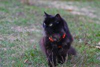 How to: Katzengeschirr anlegen & Katze an die Leine gewöhnen
