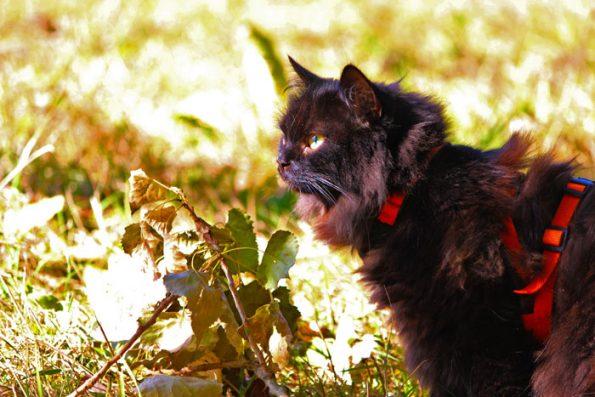 Katzengeschirr anlegen