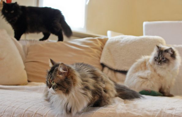 Drei Katzen zusammen