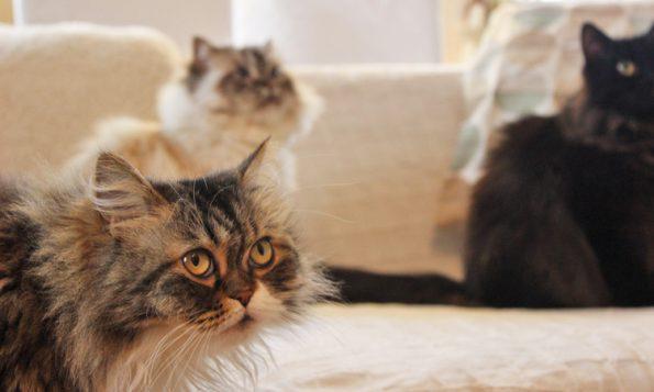 Gruppenfoto Katzen